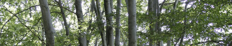 Wald am Mühlenheuweg