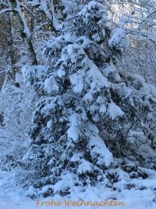Weiße Weihnachten in Dornbusch